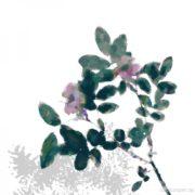 Indigiflora Series: On the Wild Side of Lake Superior, carolcooper.ca